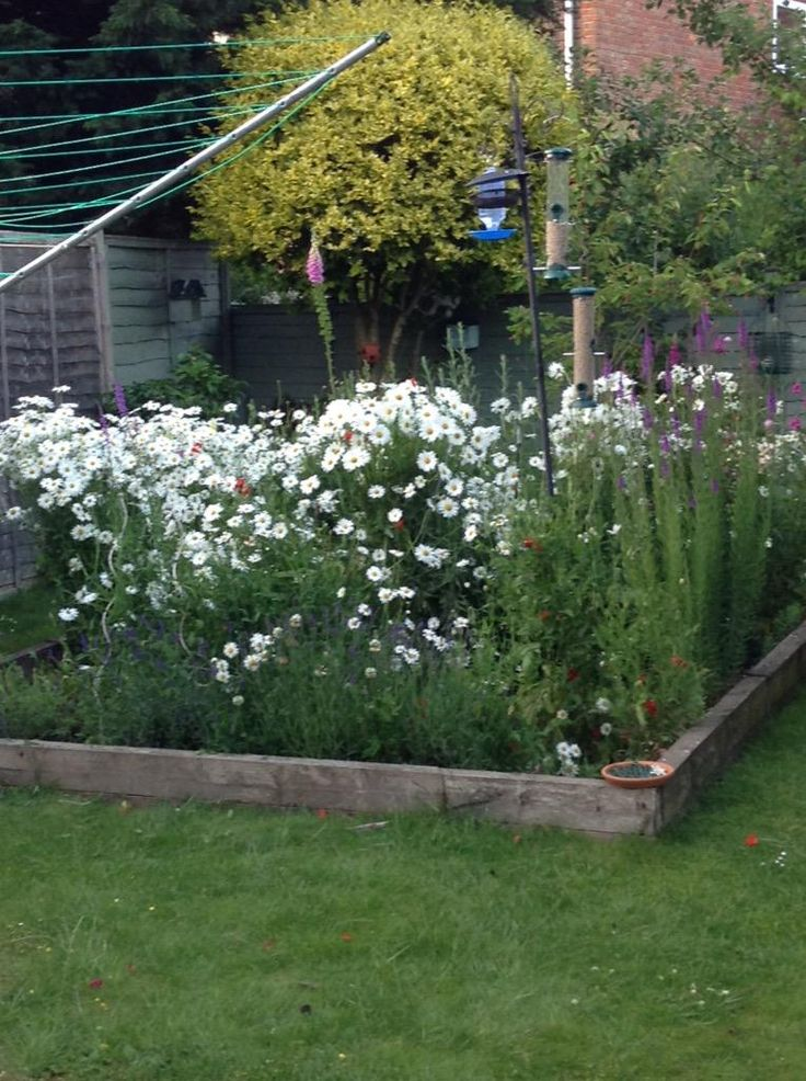 @seed_ball 3 hours and 2 garden waste bags later you can hardly see the work I have done to thin out the daisies. Con