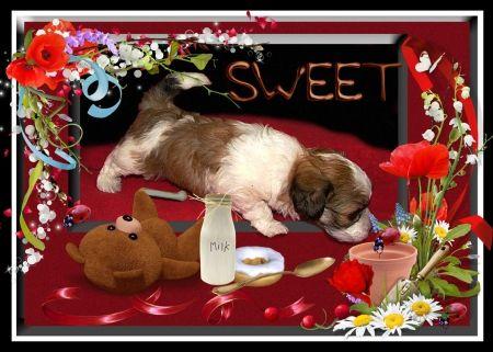 Curious Puppie - food, puppie, little dog, milk, dog, sweet