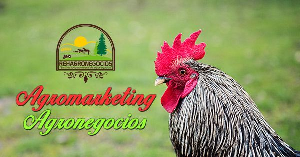 (Beneficio del agro marketing a las empresas agricolas y ganaderas) CÓMO EL AGRO MARKETING AYUDA A LAS EMPRESAS AGRÍCOLAS Y GANADERAS EN COLOMBIA  Al hablar del agro marketing como ayuda a las empresas agrícolas y ganaderas en Colombia podemos decir que, hoy en día, la tendencia en el mercado ha venido cambiando su forma de ofrecer el producto, aplicando téc...  https://goo.gl/BTeGau  Suscríbete para recibir nuestros correos informativos 👉 https://goo.gl/ggqUCi �