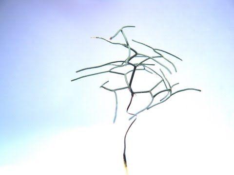 Drimia intricata -- Schizobasis -- Locality Data