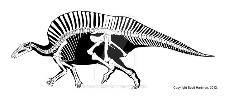 giraffatitan coloring pages | 1044 best images about * Dinosaurs Silhouettes, Vectors ...