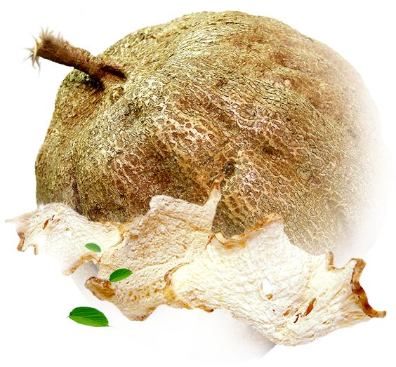 Pueraria Mirifica, a natural herb produced in Thailand is proven a solution for increasing Breast size up to 2 cups, firm them. Pueraria Mirifica Dosage includes 100 percent natural Pueraria Mirifica that eliminates signs of Aging.  Buy now