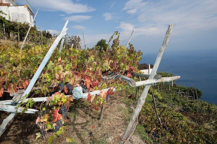 Anticipazioni Salotti del Gusto Alta Badia: saranno con noi i vini dei vigneti centenari a strapiombo sul mare di MARISA CUOMO!