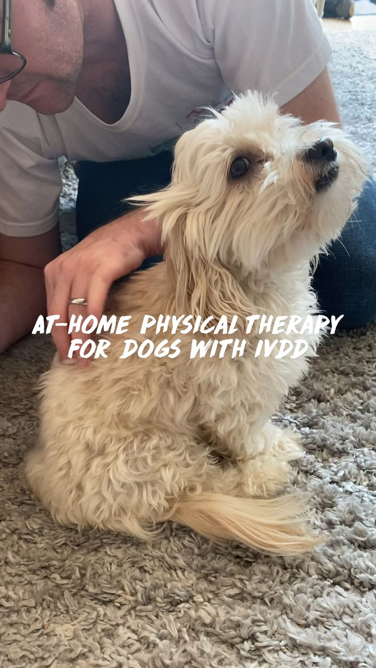 Super Cute Puppies, Cute Baby Dogs, Cute Dogs And Puppies, Pet Dogs, Pets, Cute Little Animals, Cute Funny Animals, Funny Dogs, Puppy Care
