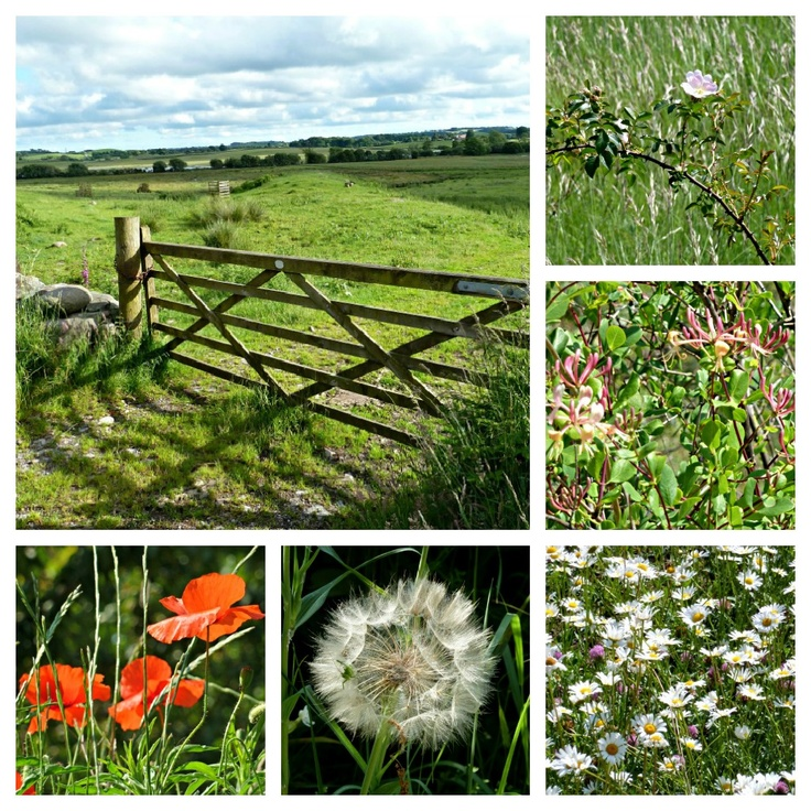 Wild flowers in the countryside