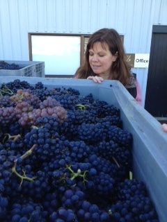 Complexity Campaign Manager Janet Pouchot inspects some freshly harvested pinot noir bunches at Quartz Reef, Central Otago, NZ