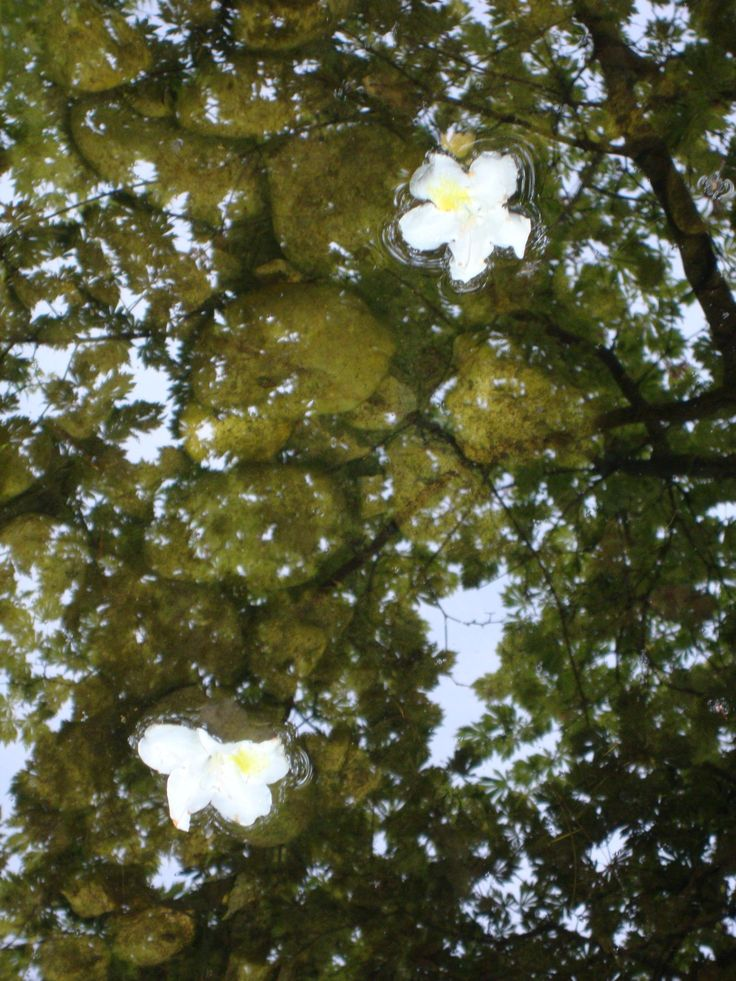 Twin sisters  #nature #white #water #flower