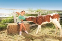 16 things to do | Head to Bestbrook Mountain Resort to experience   life on the farm. Learn how to milk the cows, feed the baby animals and collect fresh eggs. #southernqueenslandcountry