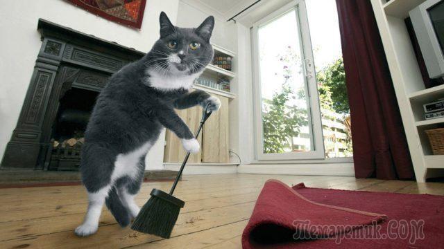 Как удалить запах кошачьей мочи в квартире, доме? Средства от запаха кошачьей мочи