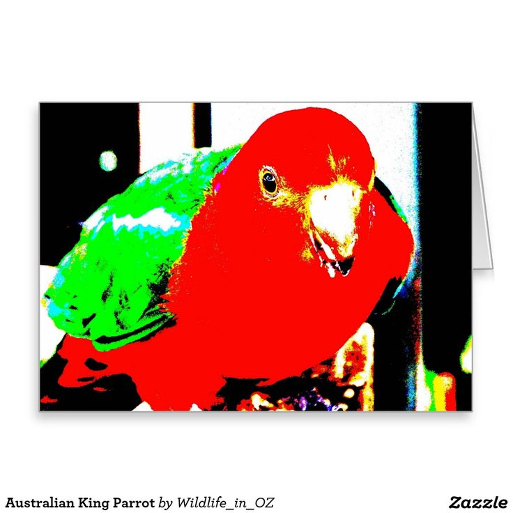 King Parrot Greeting Card - Australian Wildlife. Click on photo to view item then click on item to see how to purchase that item. #postcard #greetingcard #parrot #kingparrot #wildlife #australianwildlife #zazzle