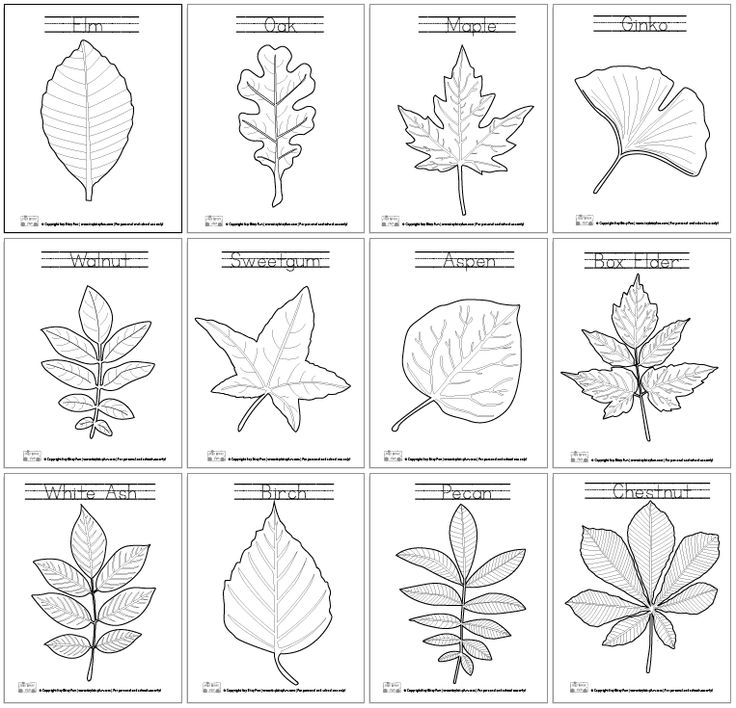 Leaves Learning Coloring Pages