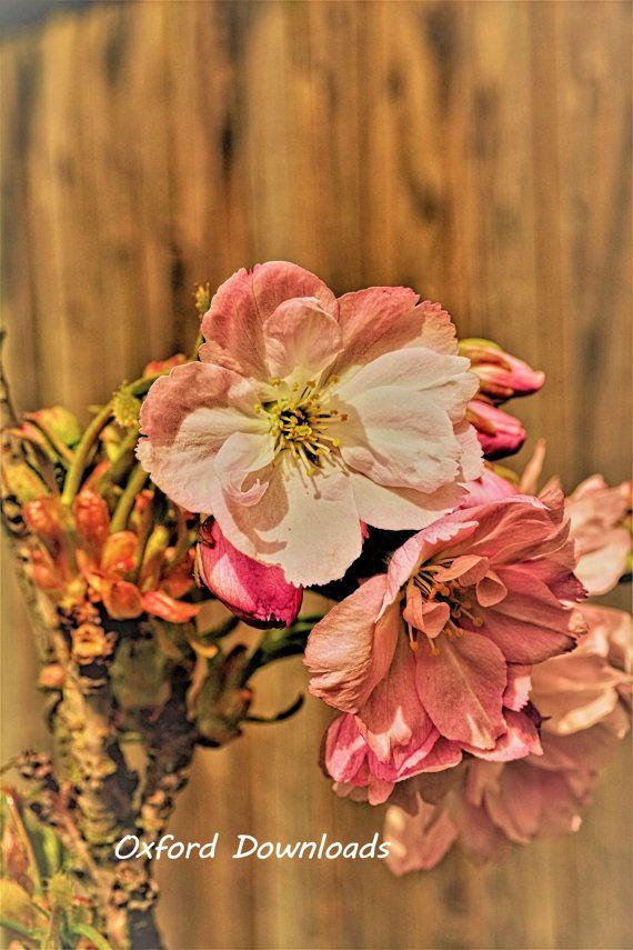 Cherry Blossom Cherry Blossom ArtSpring by OxfordDownloads on Etsy