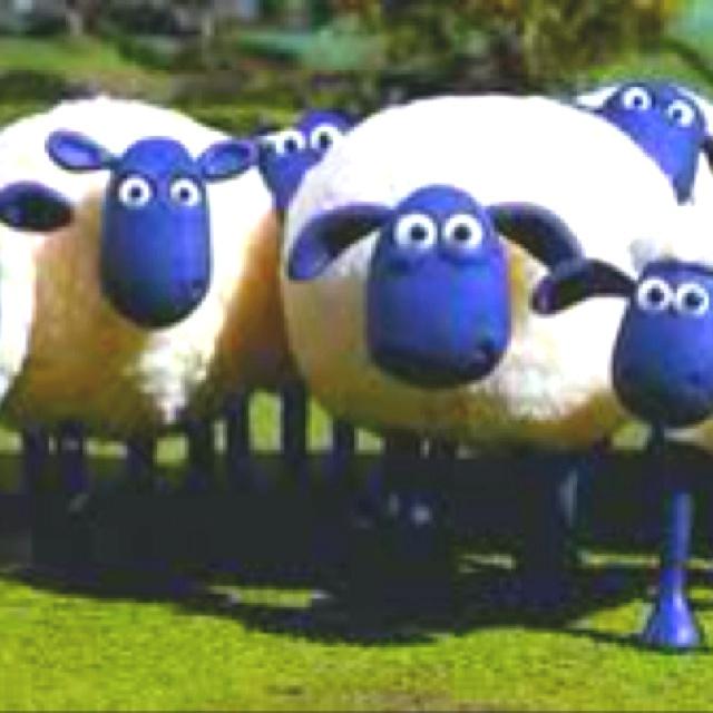 Sheep. Sheep.