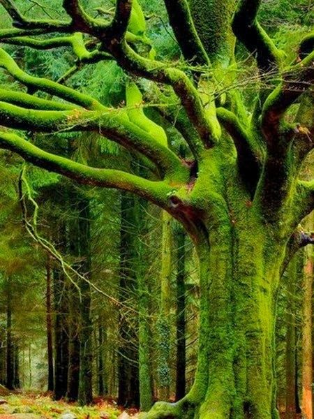 Magnificent Trees around the World !! Part 1 !! -Mossy Forest - Bingchang.