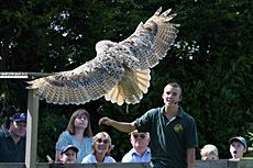 Bird Of Prey Flying Demonstrations at Liberty's Centre, Ringwood, Hampshire