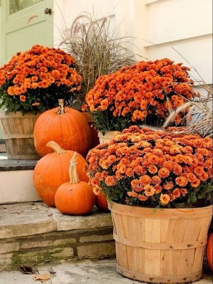 .mums and pumpkins on the porch