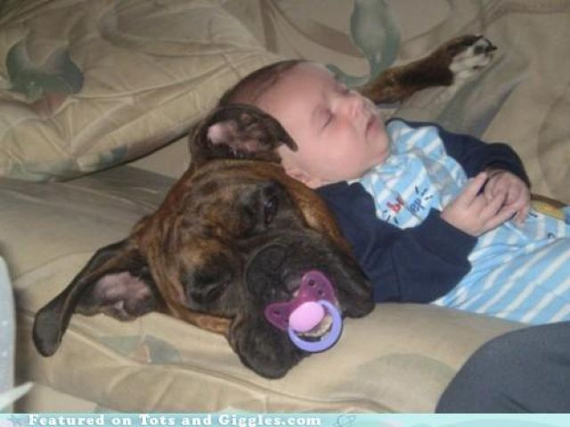 made me laugh! So adorable: Best Friends, Funny Dogs, Cute Boys, Bestfriends, Pet, Pit Bull, Baby Dogs, Naps Time, Sleep Baby