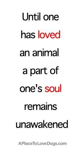 Until one has loved an animal, a part of one's soul remains