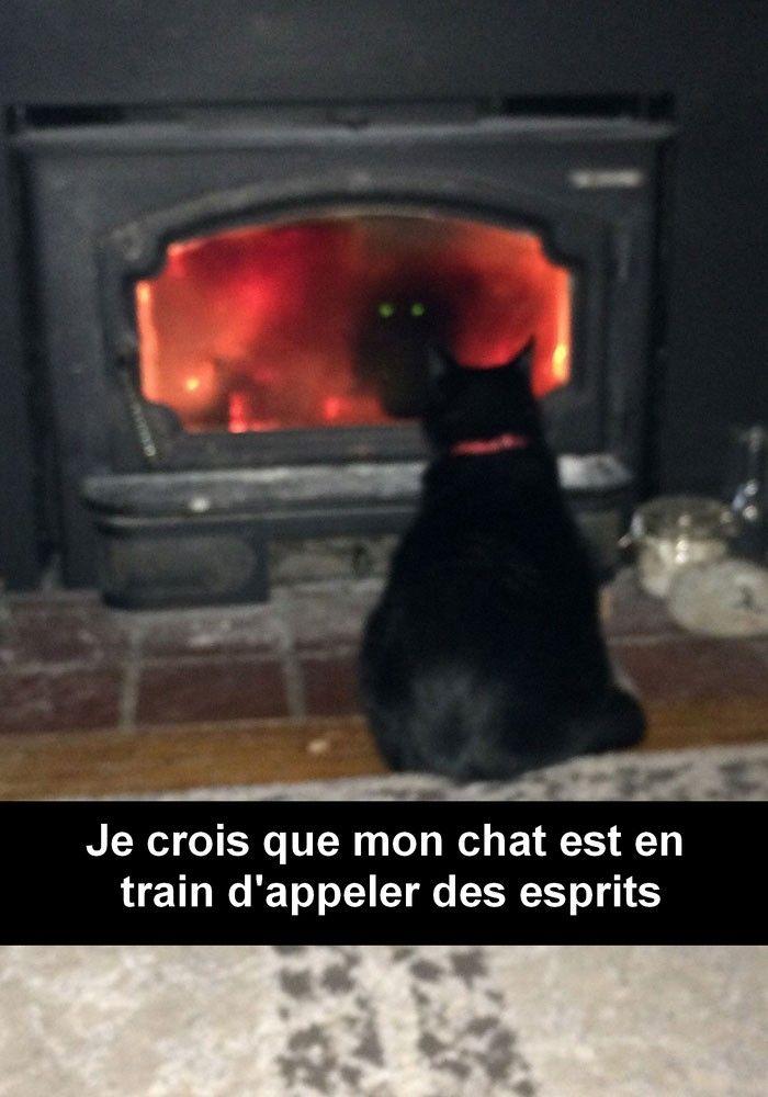 30 Snapchat de chats absolument hilarants
