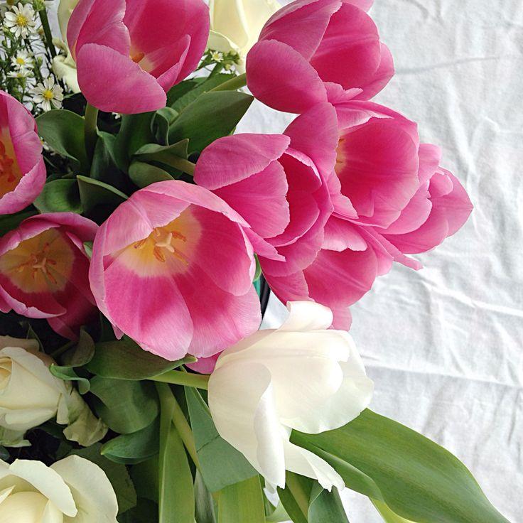 Fleeting Buds tulips