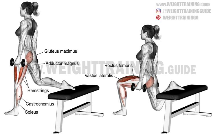Dumbbell one leg split squat (aka dumbbell Bulgarian split squat). A unilateral compound exercise. Target muscles: Quadriceps (Vastus Lateralis, Vastus Medialis, Vastus Intermedius, and Rectus Femoris). Synergistic muscles: Gluteus Maximus, Adductor Magnus, and Soleus. Dynamic stabilizers: Hamstrings and Gastrocnemius.