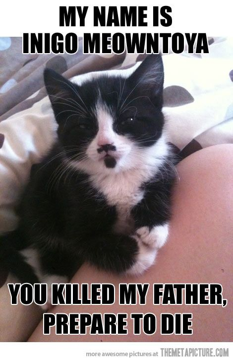 Ahahahahahahahaha! I want this cat so I can giggle every day!