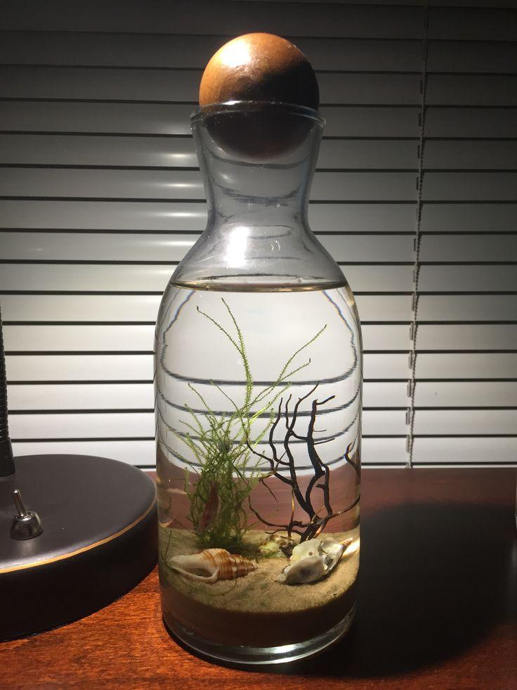 Diy ecosystem shrimp dream garden aquarium terrarium for Bottled water for betta fish