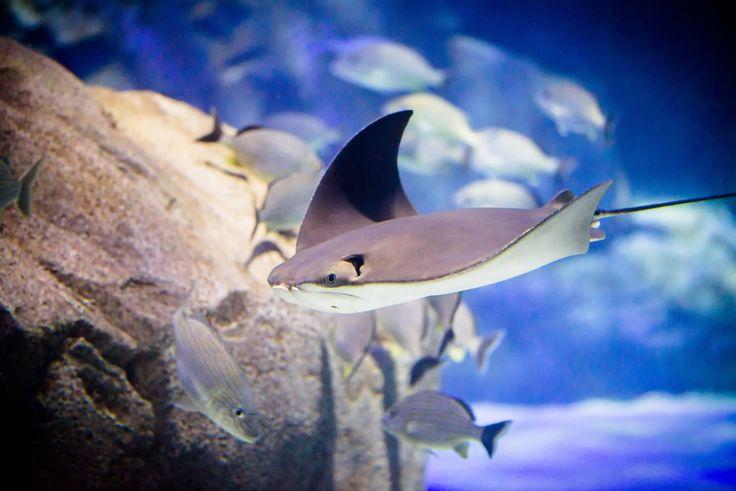 ripley's aquarium toronto inside - Google Search