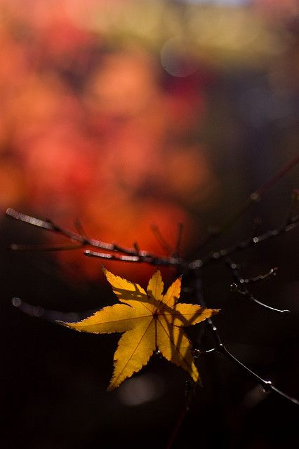 ♀ Bokeh photography Amazing nature autumn leaf