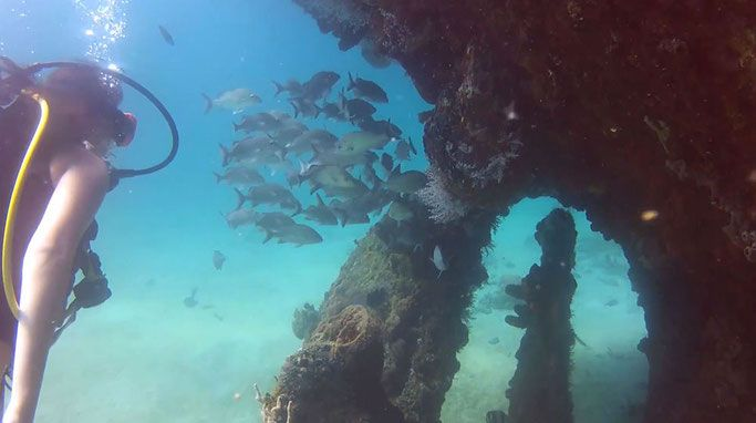 A Beginners guide to Scuba Diving in Barbados