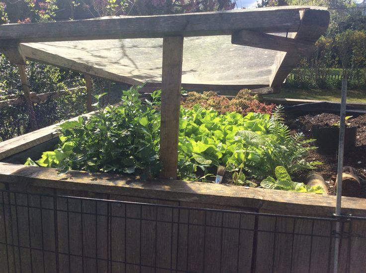 Noch sind die Schnecken klein und der Salat wird groß:-)