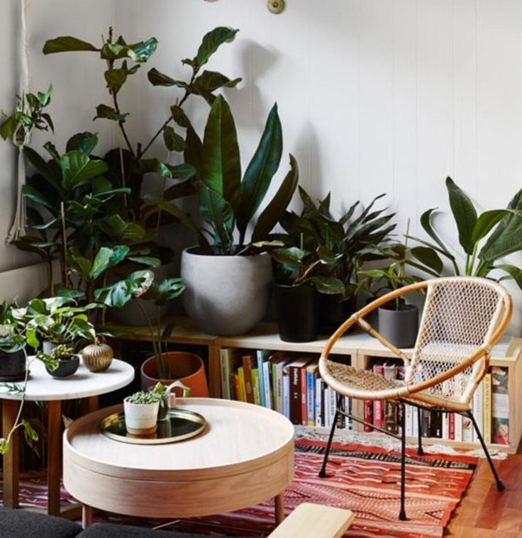 The Dream Indoor Jungle Situation