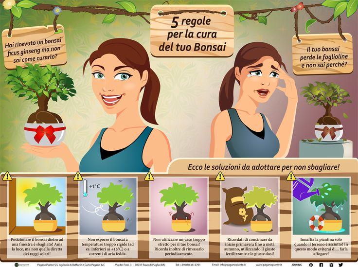 Il #Bonsai ficus ginseng è una pianta ornamentale da interno. Per curarlo al meglio, è importante evitare 5 errori riguardanti innaffiatura, concimazione, rinvaso e collocazione della pianta. Infografica Bonsai Ficus #infographic
