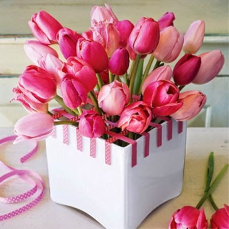 Η τουλίπα είναι φυτό που ανήκει στην  οικογένεια των Liliaceae. Στο γένος αυτό υπάγονται 100 περίπου είδη βολβωδών φυτών, τα οποία προέρχονται από  την Ευρώπη, την Δυτική και Κεντρική Ασία αλλά και την Βόρεια Αφρική. Από τα είδη Tulipa gesneriana, Tulipa kaufmanniana, Tulipa fosteriana, Tulipa greigi και άλλα, έχουν προέλθει οι 3000 ποικιλίες που καλλιεργούνται σήμερα.