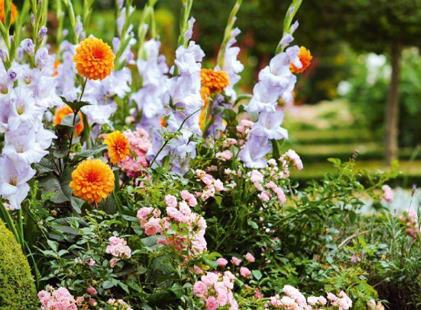 правильные советы по планировке сада-огорода