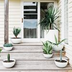 Unearthing summer planter love with all our favourites Dragon tree, Aloe, Cactus, Chalk Sticks and the heavenly Sanseveria. Big thanks to @e_mantello for sharing the plant love 🌿🌵🍀🌱#Planters #comeoutdoorswithus  #allaustralianmade #getyourgreenon #outdoorplanters #summerplanting 📷@leanandmeadow