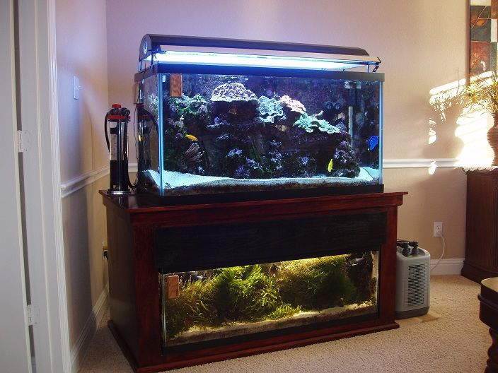 33 best images about saltwater aquarium on pinterest for 90 gallon fish tank stand
