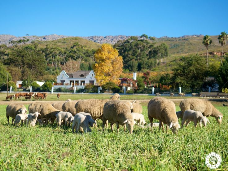 Cecilia's Farm is a place of wonder and striking beauty where her family has farmed the land for generations. www.ceciliasfarm.co.za