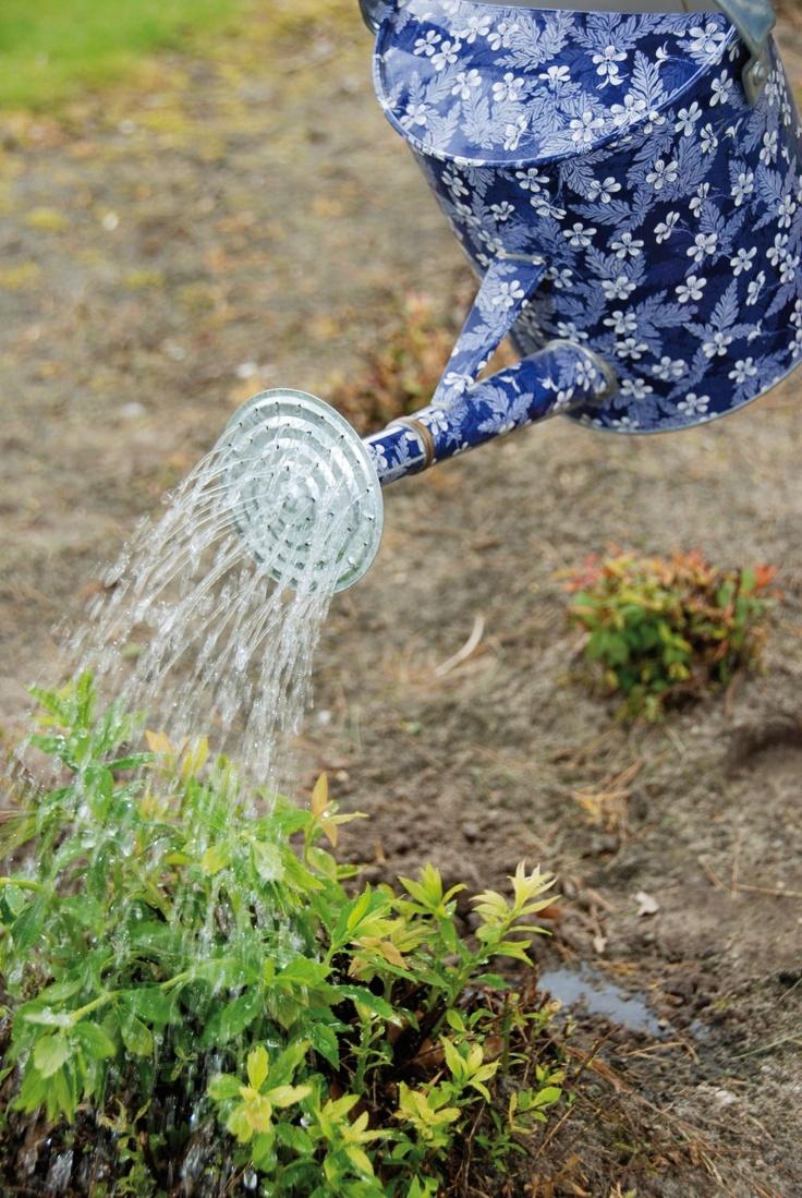 Parpadi LLC - Watering Can - Blue Blossom Design, $32.95 (http://www.parpadi.com/watering-can-blue-blossom-design/)