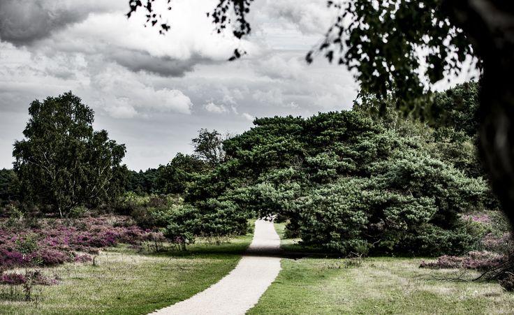https://flic.kr/p/xgCNK7 | 245/365. Heathland at Hilversum, another view.