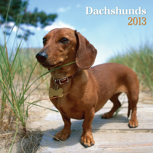 what does the word dachshund mean in german