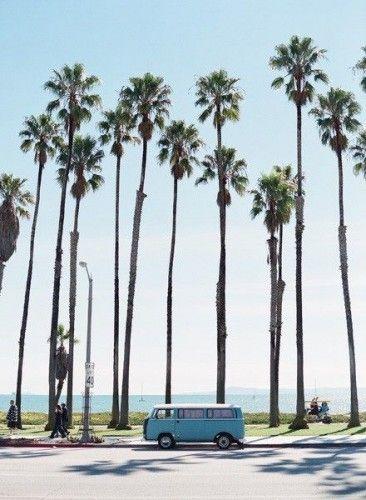 California, palm trees, blue van, beach, grass