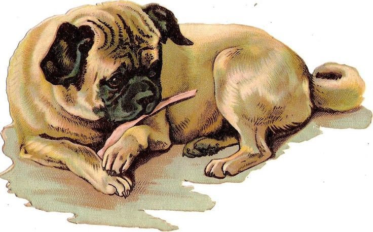 Oblaten Glanzbild scrap die cut chromo Hund dog 14cm puppy chien Welpe