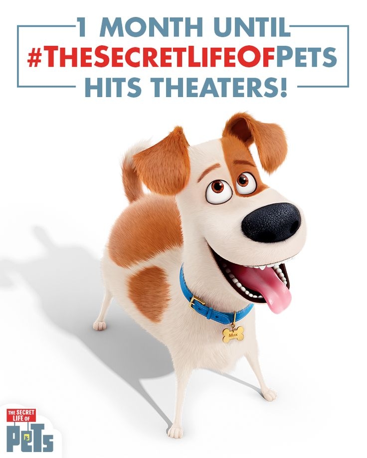 Only 1 month left until The Secret Life of Pets hits