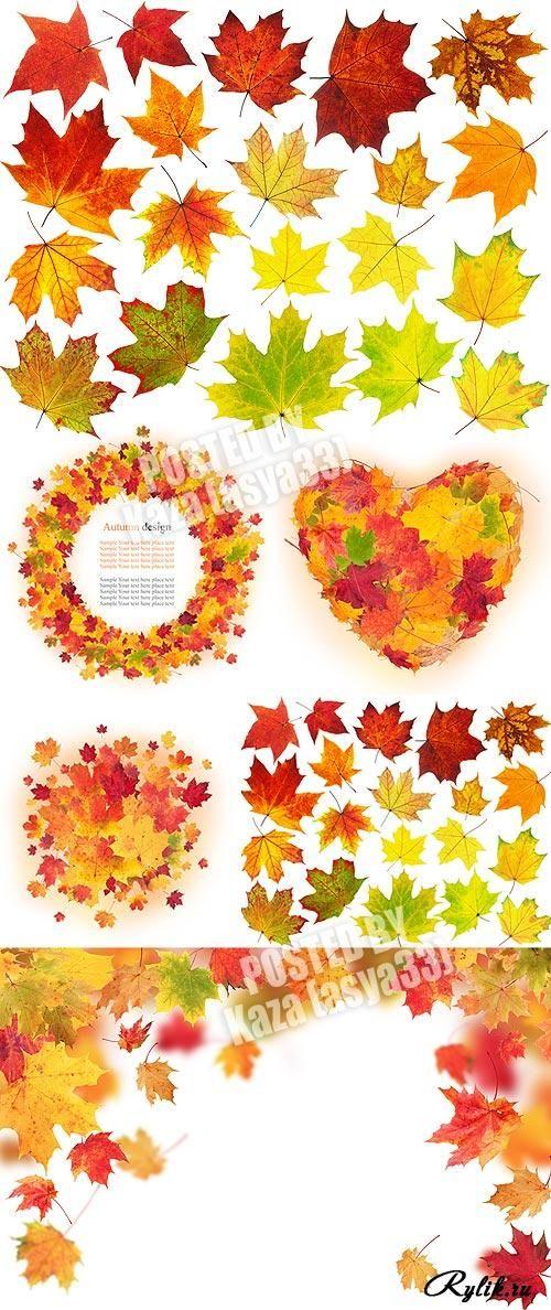 Осенняя рамка, кленовые листья на белом фоне, листва, сердце. Autumn leaves 4