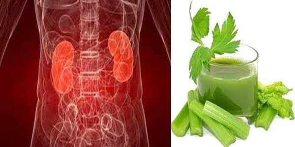 Ginjal adalah organ yang sangat penting bagi kita, mari jaga kesehatan ginjal dengan memanfaatkan bahan alami sebagai obat untuk mencuci ginjal