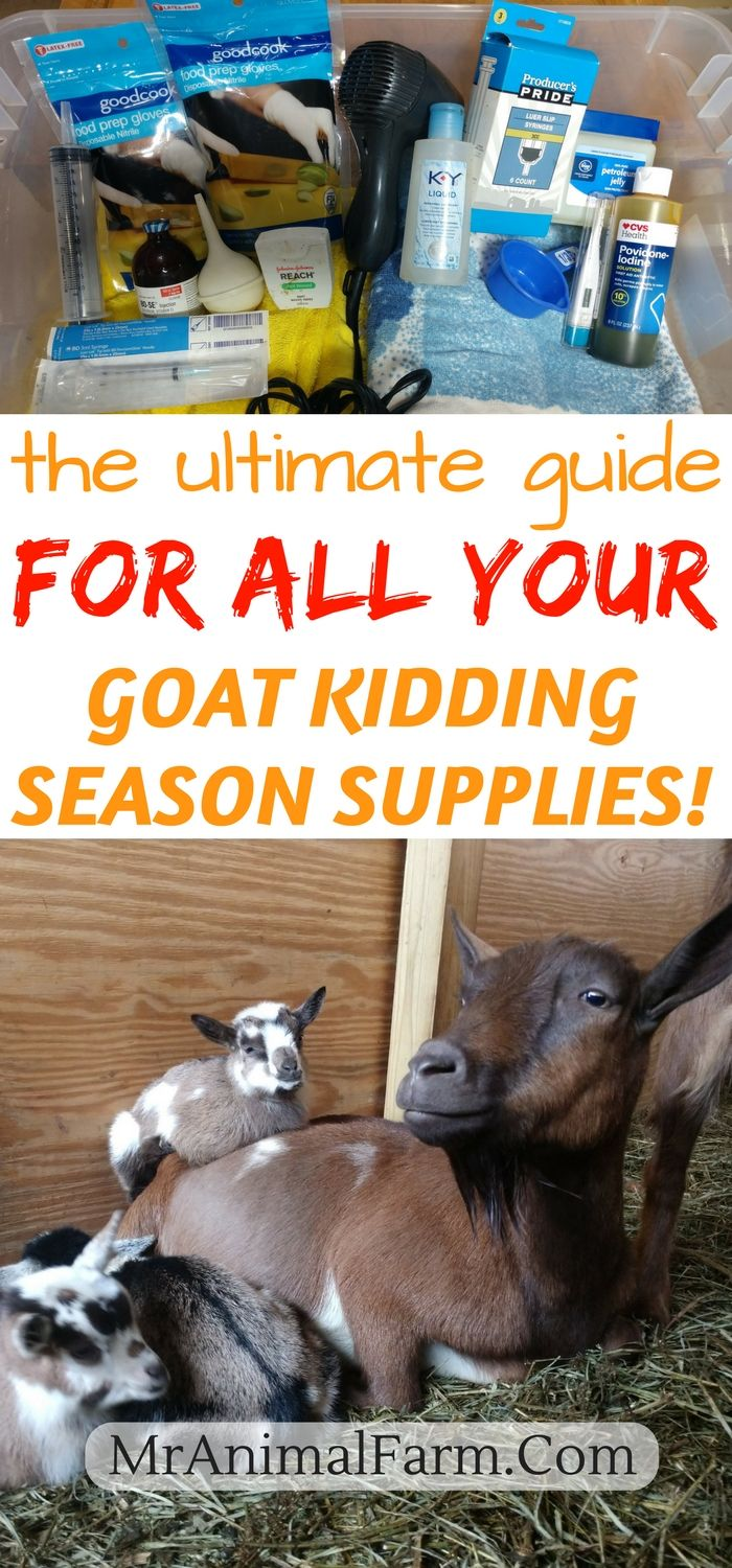Baby Goat Kidding Supplies. You have baby goats on the way and you are a little worried about your kidding kit. Do you know if you have all the goat kidding supplies you will need? Find out EXACTLYwhat you need to deliver healthy baby goats!