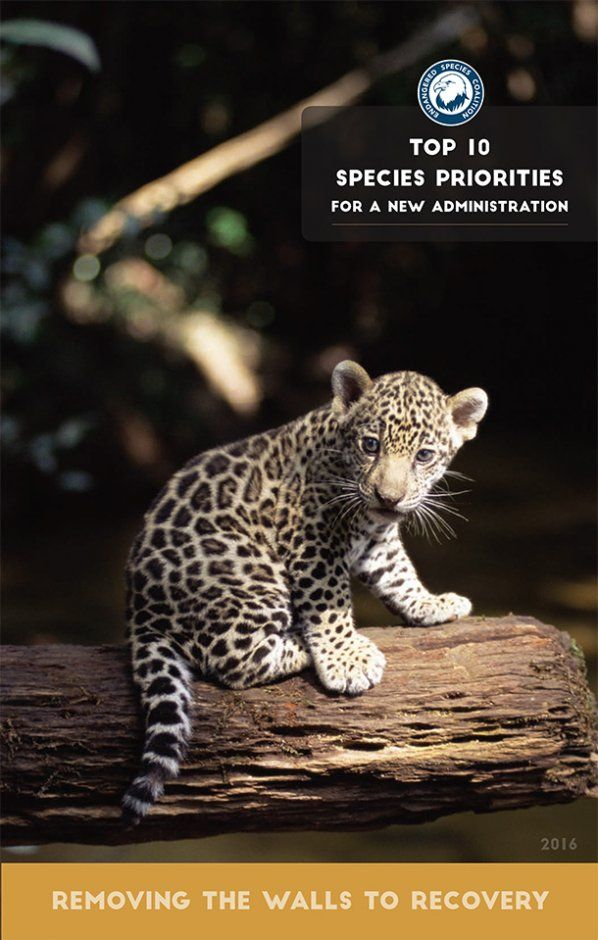 """Endangered Species Coalition, of which IFAW is a member group, released today a """"Top Ten"""" list of imperiled species in need of strong conservation measures."""