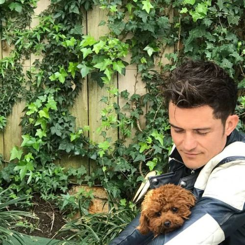 Orlando Bloom Instagram dog post <3