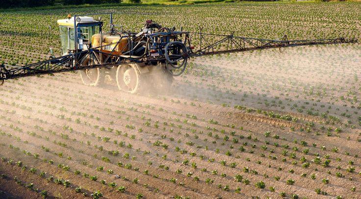 """""""On faisait le sale boulot""""... """"Pour Raymond Pouliquen et son fils Noël, c'est le combat d'une vie. Après 20 ans comme employés dans une coopérative agricole à Glomel, site classé Seveso seuil haut (dans le Morbihan, près de Carhaix) ils ont développé des maladies graves. Ils se disent aujourd'hui intoxiqués par les pesticides que leur entreprise Triskalia (géant de l'agroalimentaire en Bretagne qui possède, entre autres, les marques Paysan Breton, Mamie Nova..) les obligeait à manipuler…"""